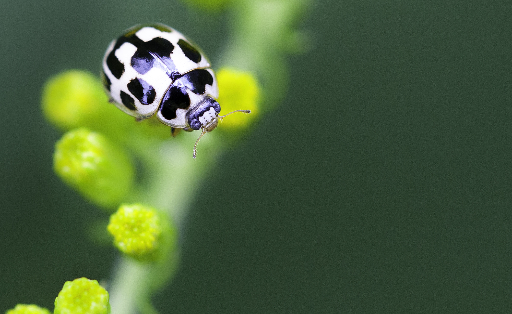 Photograph Ladybug by keith Roselle on 500px