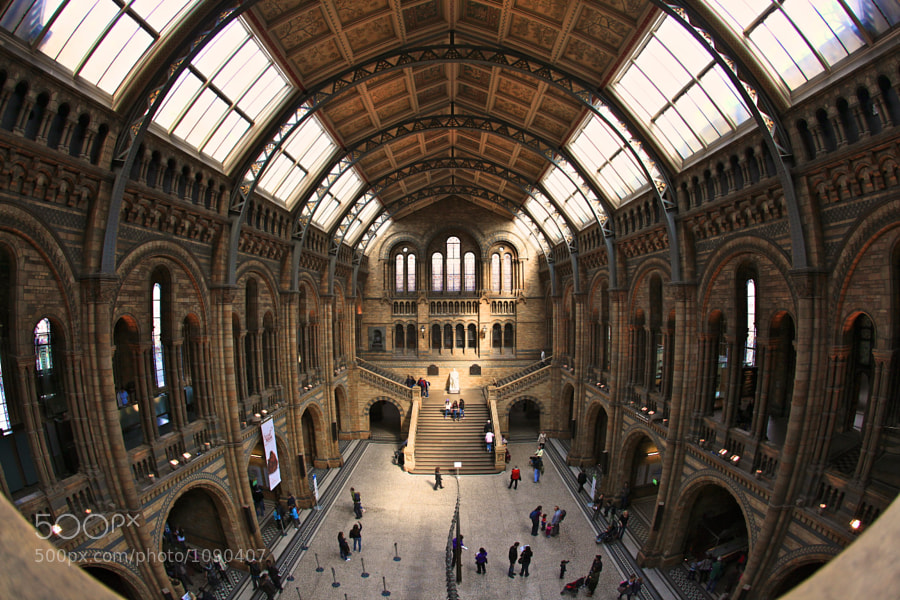 Taken above the mighty diplodocus exhibit at the NHM in London.