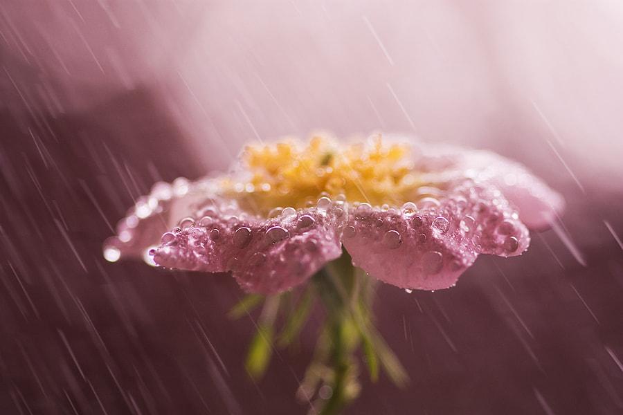 Rain flower by Marcsi Sluch on 500px.com