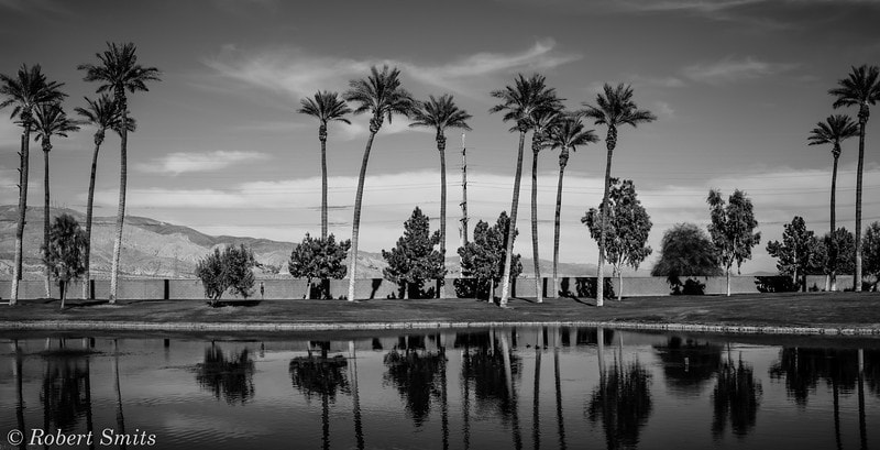Photograph Palm Desert (B&W) by Robert Smits on 500px
