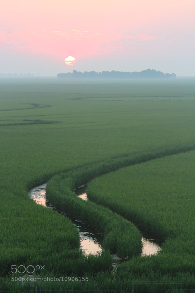 Photograph Have a Rice Day by Mike Fry on 500px