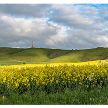 Cherhill panorama with rape seed