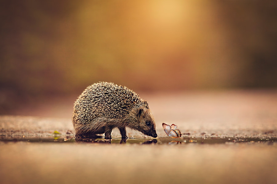 Photograph Small Friends by Anna Karin Pålsson on 500px