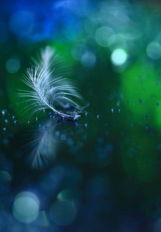 Photograph Delicate and Feeble by Shihya Kowatari on 500px