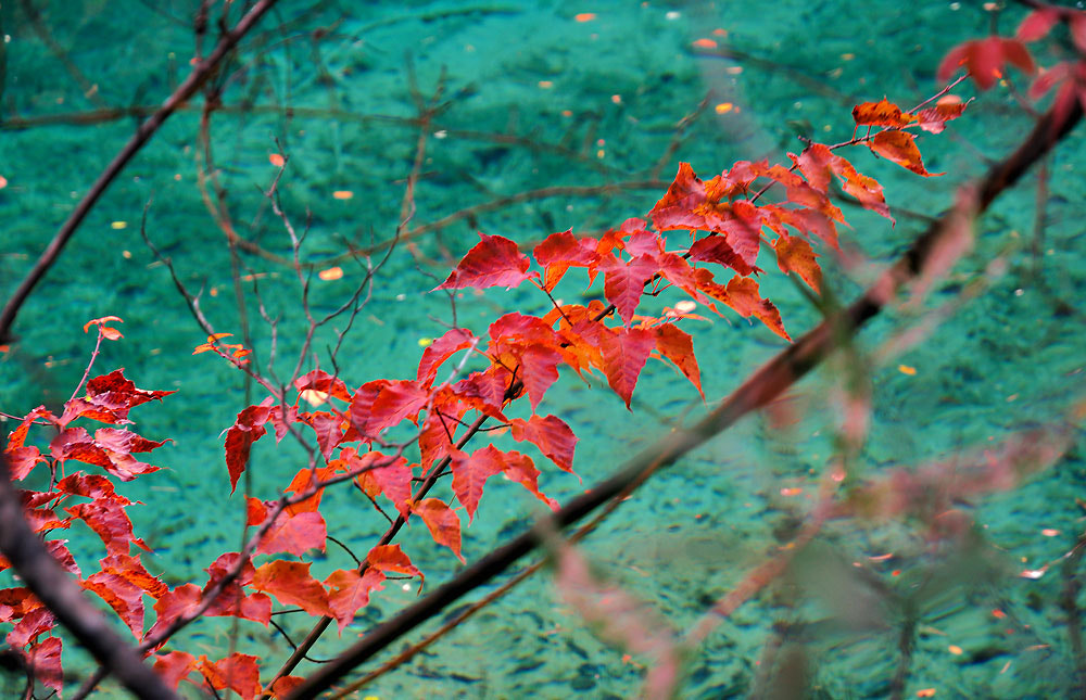Photograph color of leaf  by Jumrus Leartcharoenyong on 500px