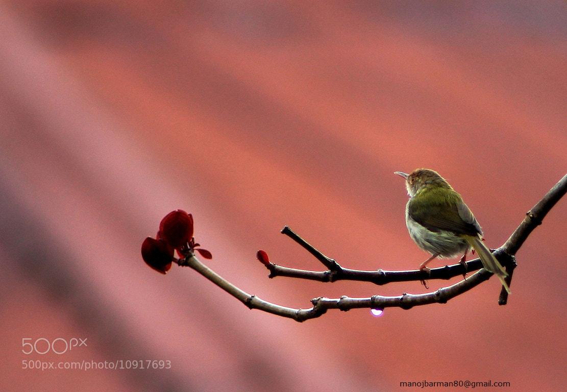 Photograph Untitled by Manoj Kumar Barman on 500px