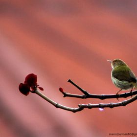 Untitled by Manoj Kumar Barman (manojbarman80)) on 500px.com
