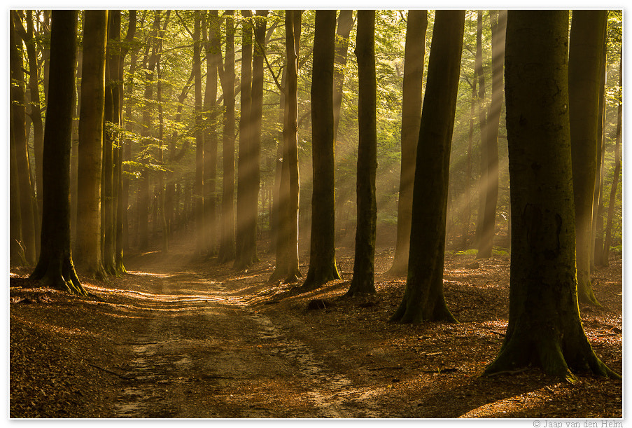 Photograph Path in the morning by Jaap van den Helm on 500px