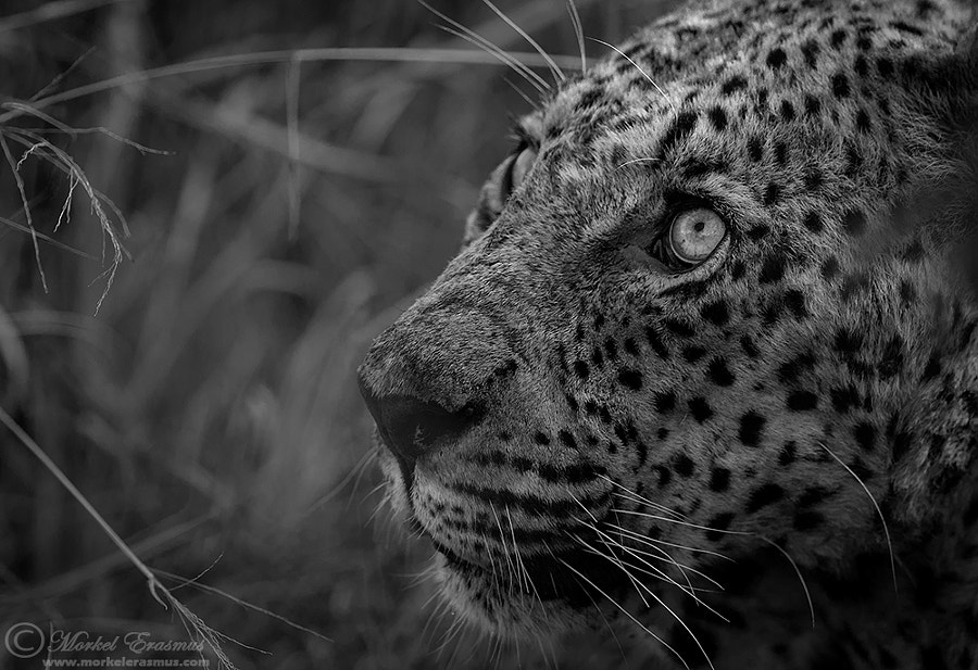Photograph All in the eyes... by Morkel Erasmus on 500px