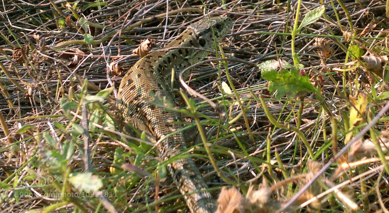 Photograph Camouflage by Mia Jitaru on 500px