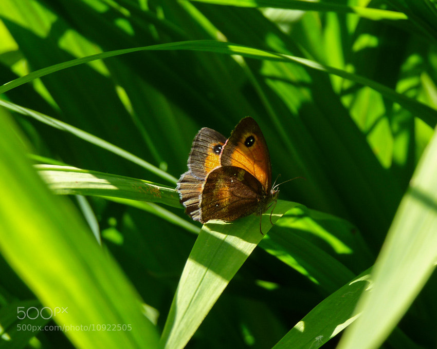 Photograph butterfleye by Anne-Laure BERNARD on 500px