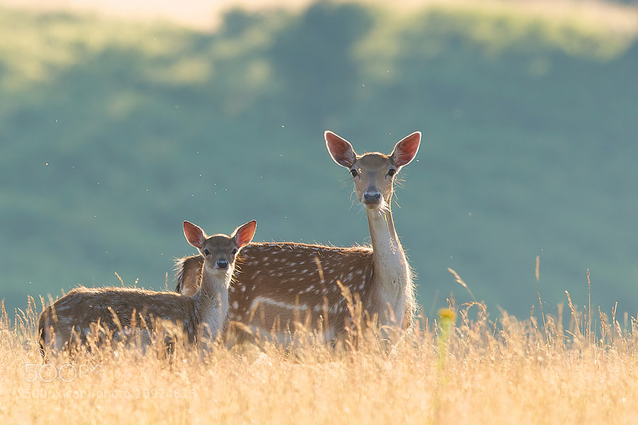 Photograph out with mum by Mark Bridger on 500px