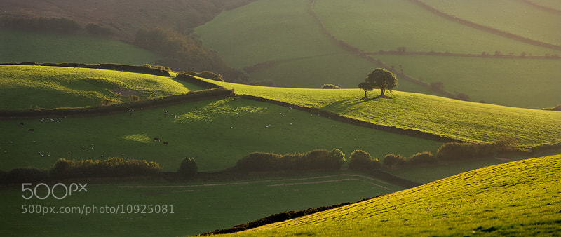 Photograph Greens of Exmoor by Adam Burton on 500px