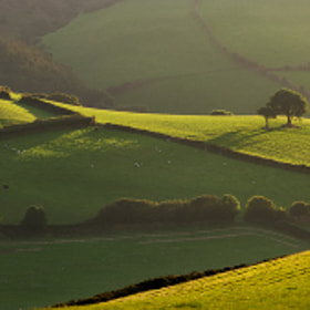 Greens of Exmoor by Adam Burton (adamburton)) on 500px.com