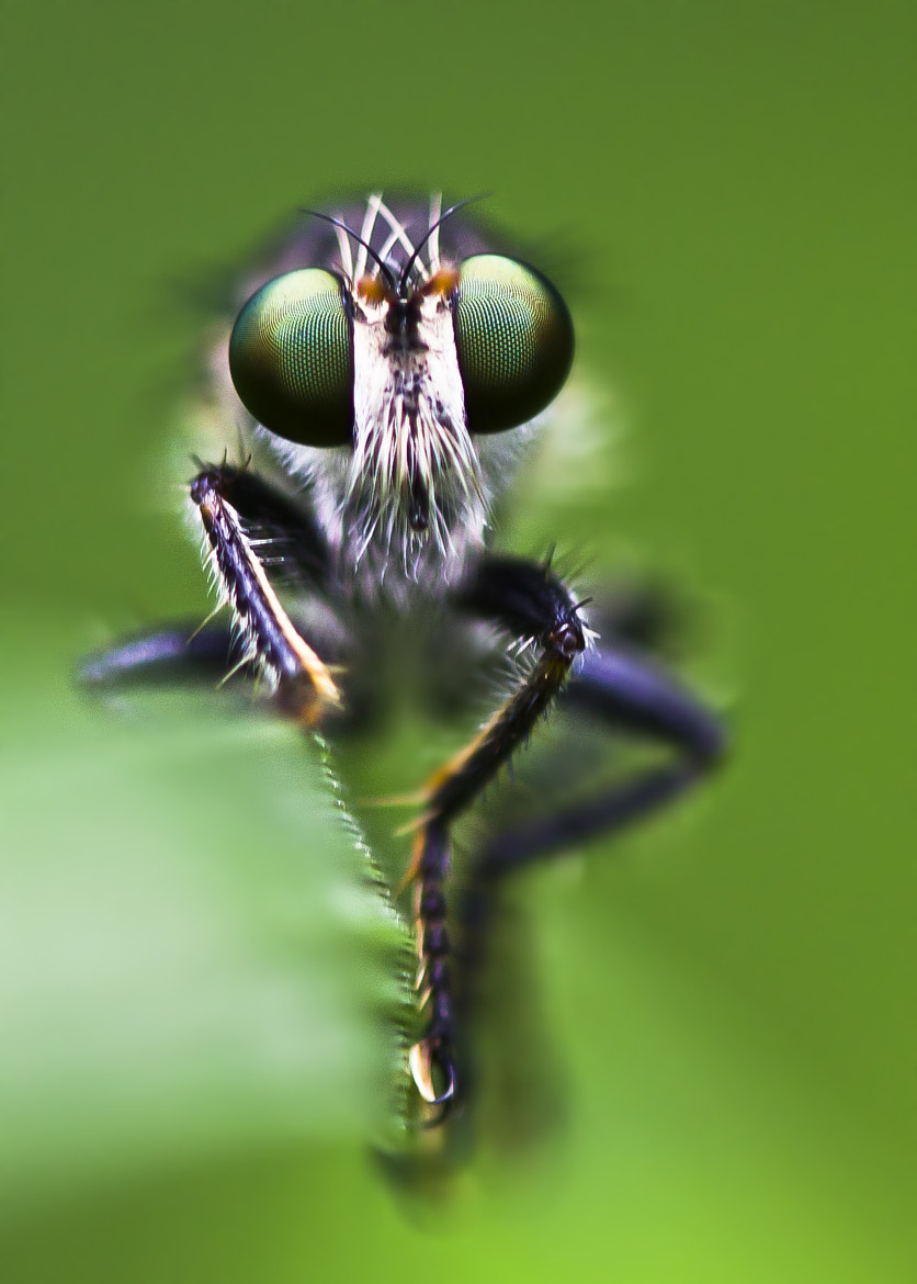 Photograph robber fly by Abhishek Chatterjee on 500px