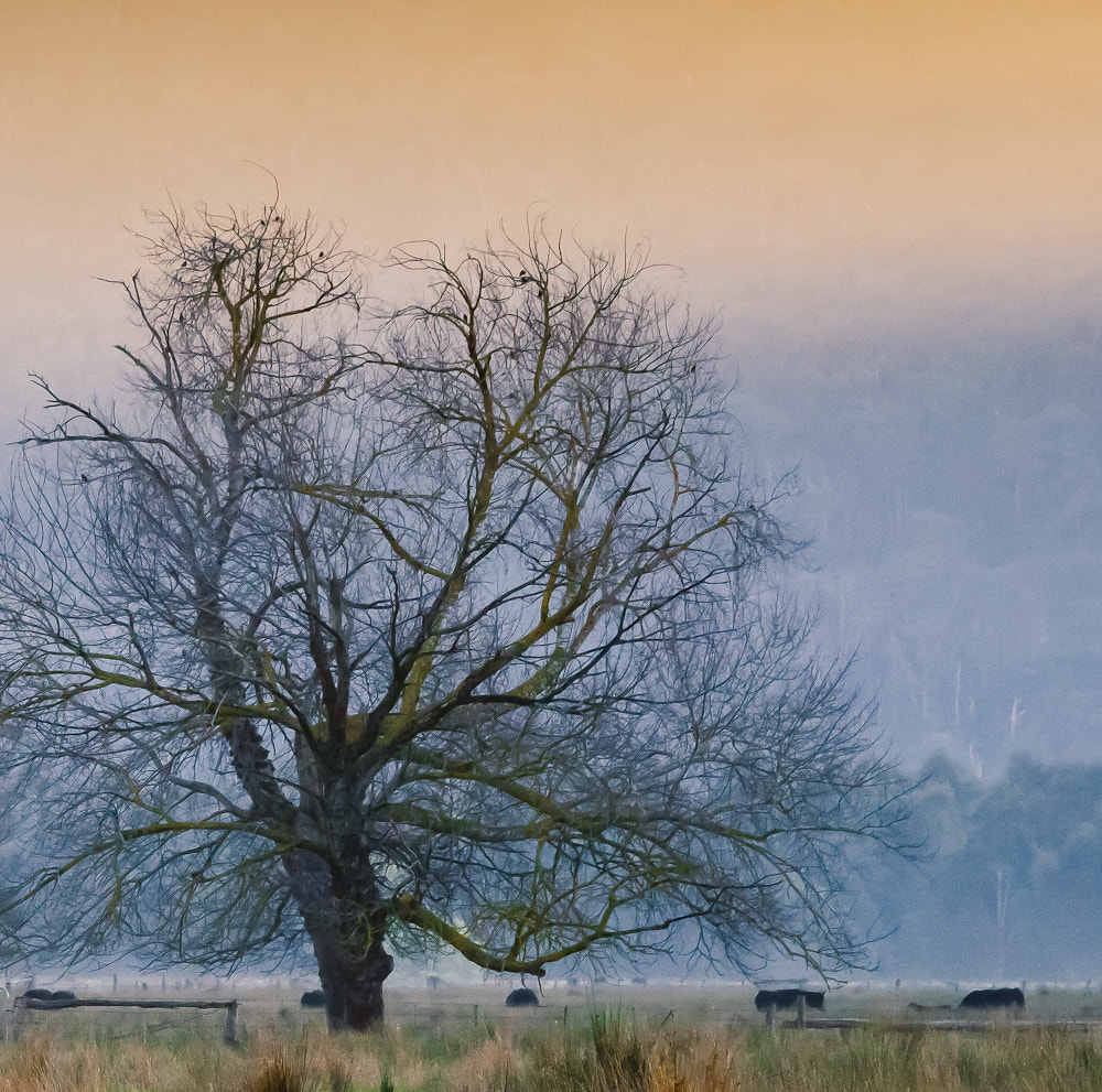 Photograph Landscape with a Tree by Margaret Netherwood on 500px