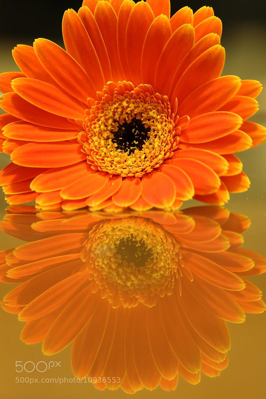 Photograph Flower Reflection by John Velocci on 500px
