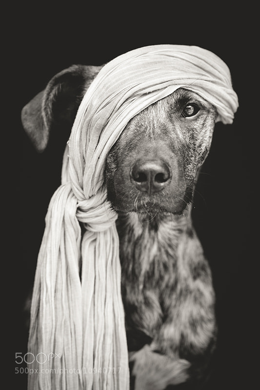 Dog photography - Photograph Pirate of the Baltic Sea by Elke Vogelsang on 500px