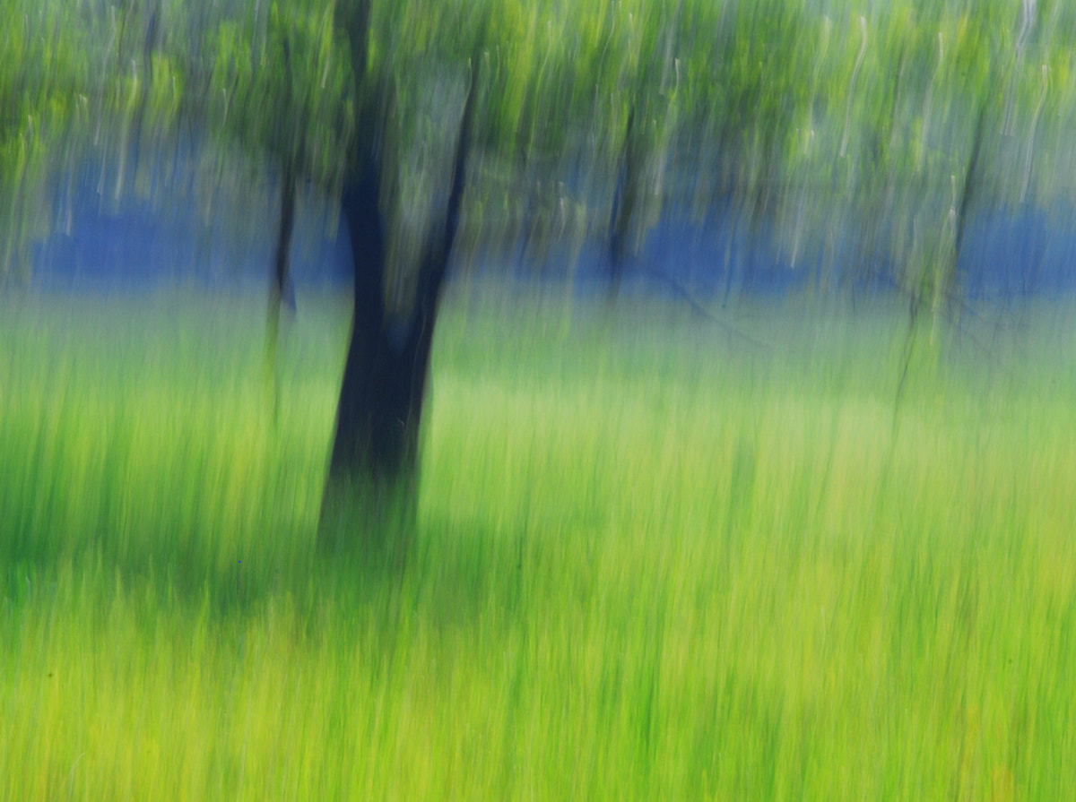 Photograph Dream tree by Pan. 101 on 500px