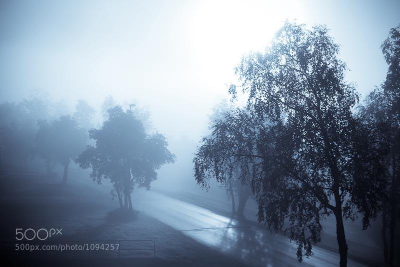 Photograph Autumn fog by Magnus Pohjanen on 500px