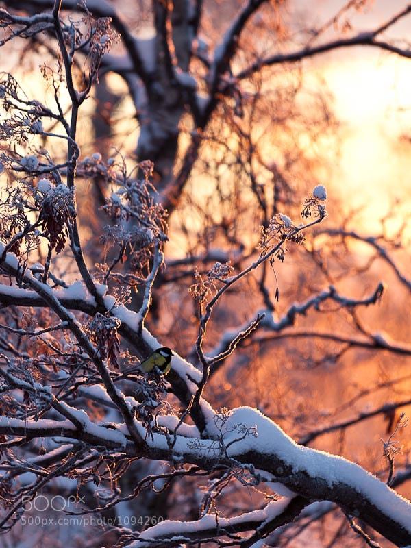 Photograph Morning sun by Magnus Pohjanen on 500px