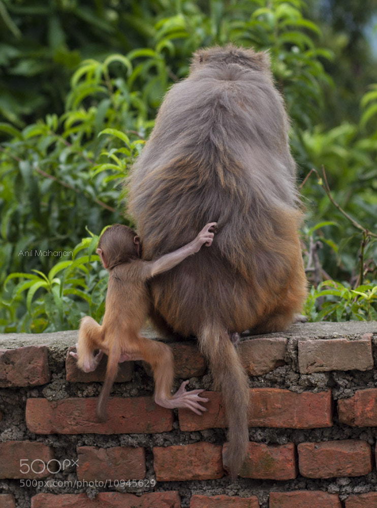 Photograph Mother and her kid by Anil Maharjan on 500px
