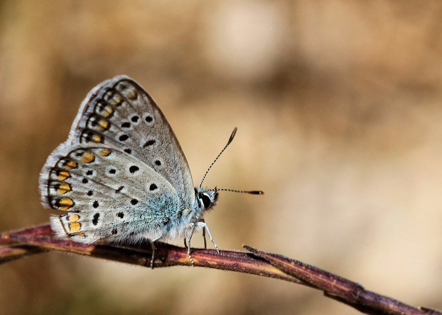 Photograph Small Butterfly. by Necdet Yasar on 500px