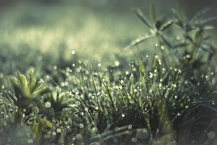 Photograph Morning dew by alexander kan on 500px