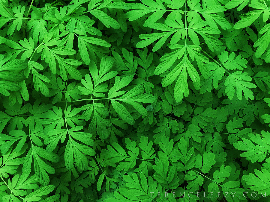 Go Green by Terence Leezy on 500px.com