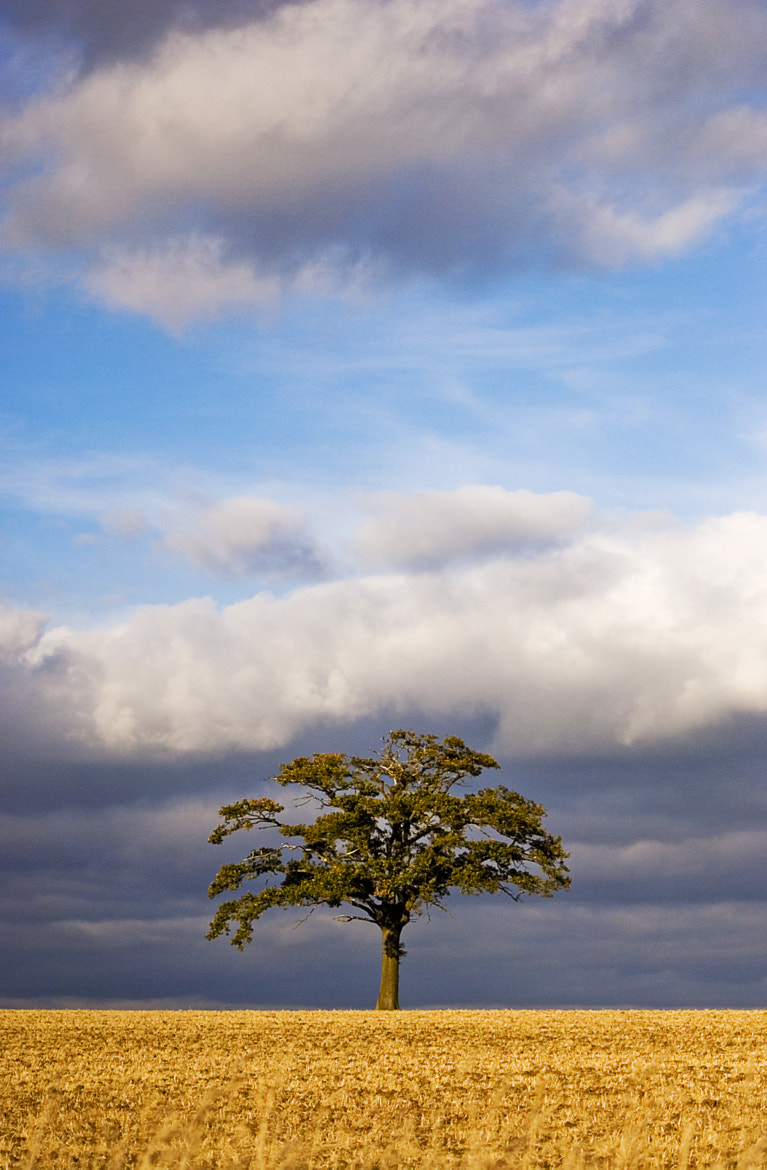 Photograph Lone Tree by Garry Byles on 500px