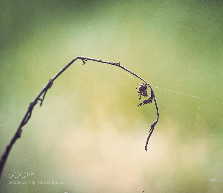 Photograph araignée by Dondré Pete on 500px