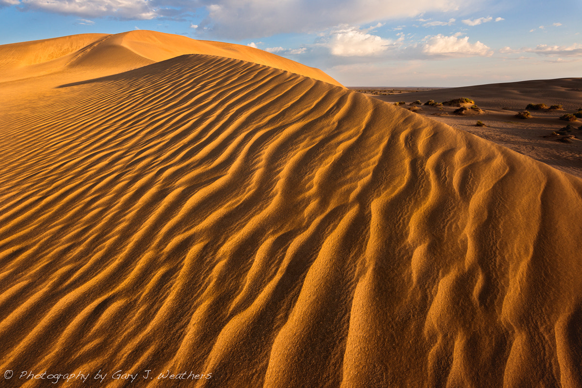 Photograph Golden waves by Gary Weathers on 500px