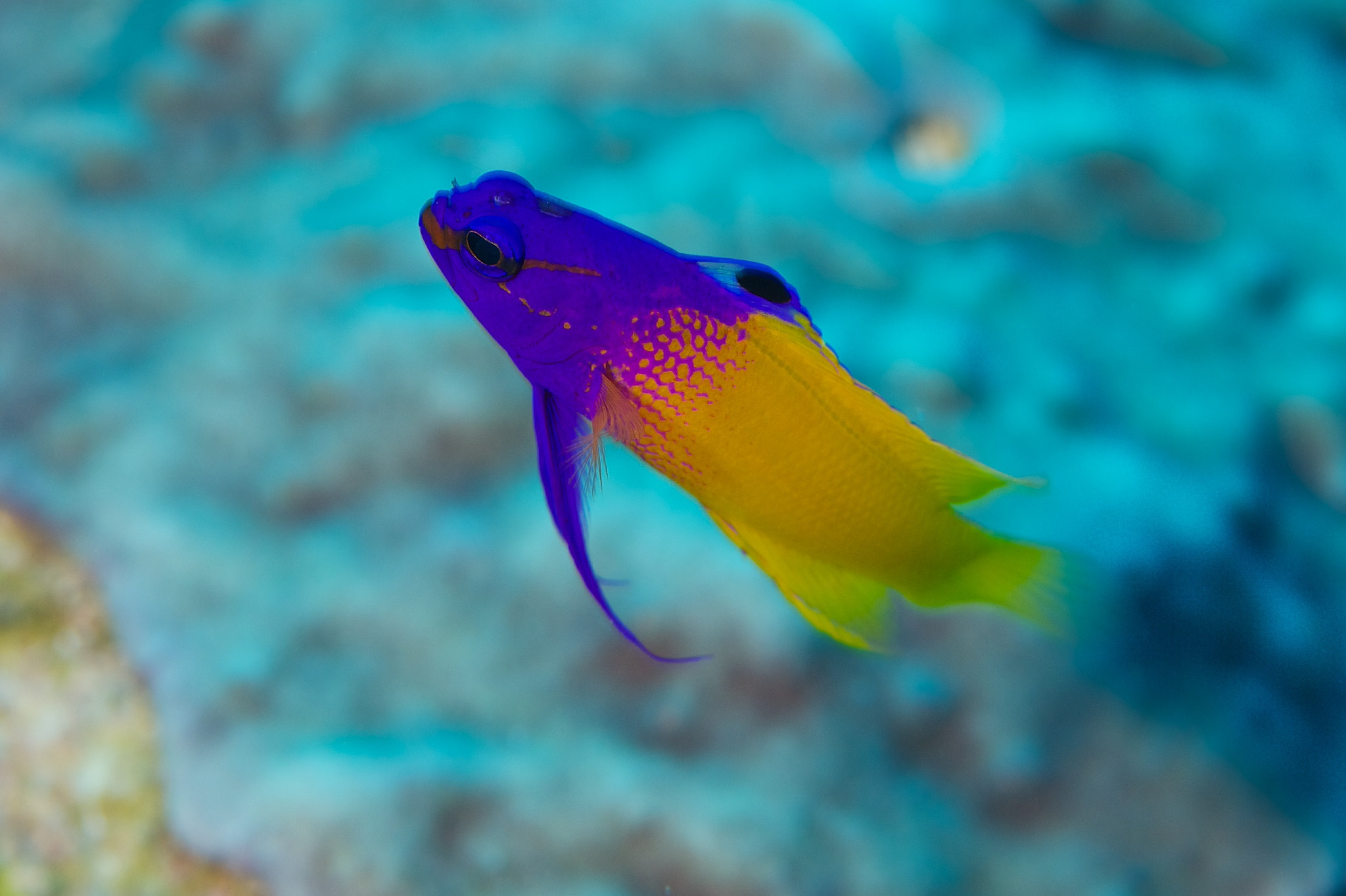 Photograph Cayman Diving by Jay  on 500px