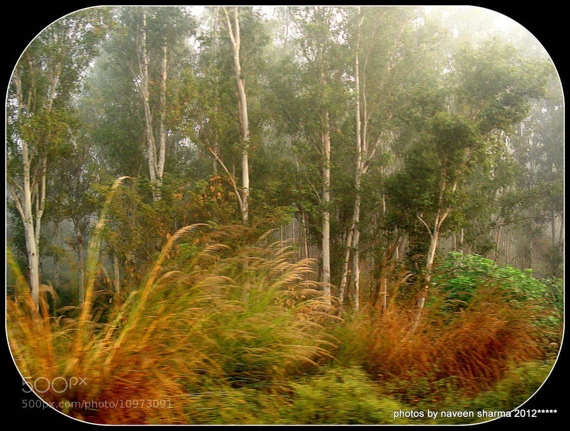 Photograph MISTY LANDSCAPE OF RAIL SIDE IN PUNJAB  by naveen sharma on 500px