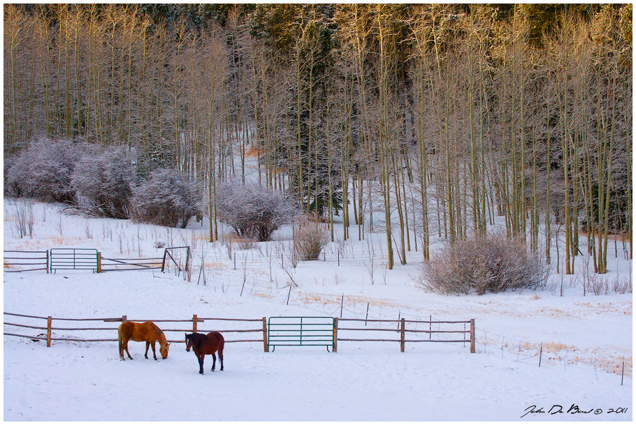 Photograph Where The Horses Roam by John De Bord Photography on 500px