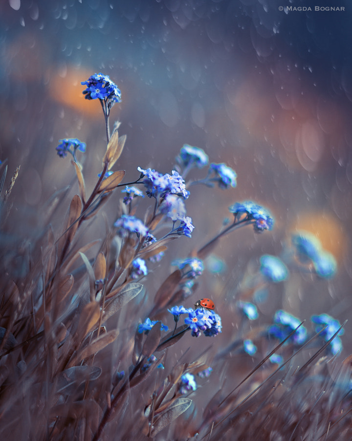 Photograph Blue Meadows by Magda  Bognar on 500px