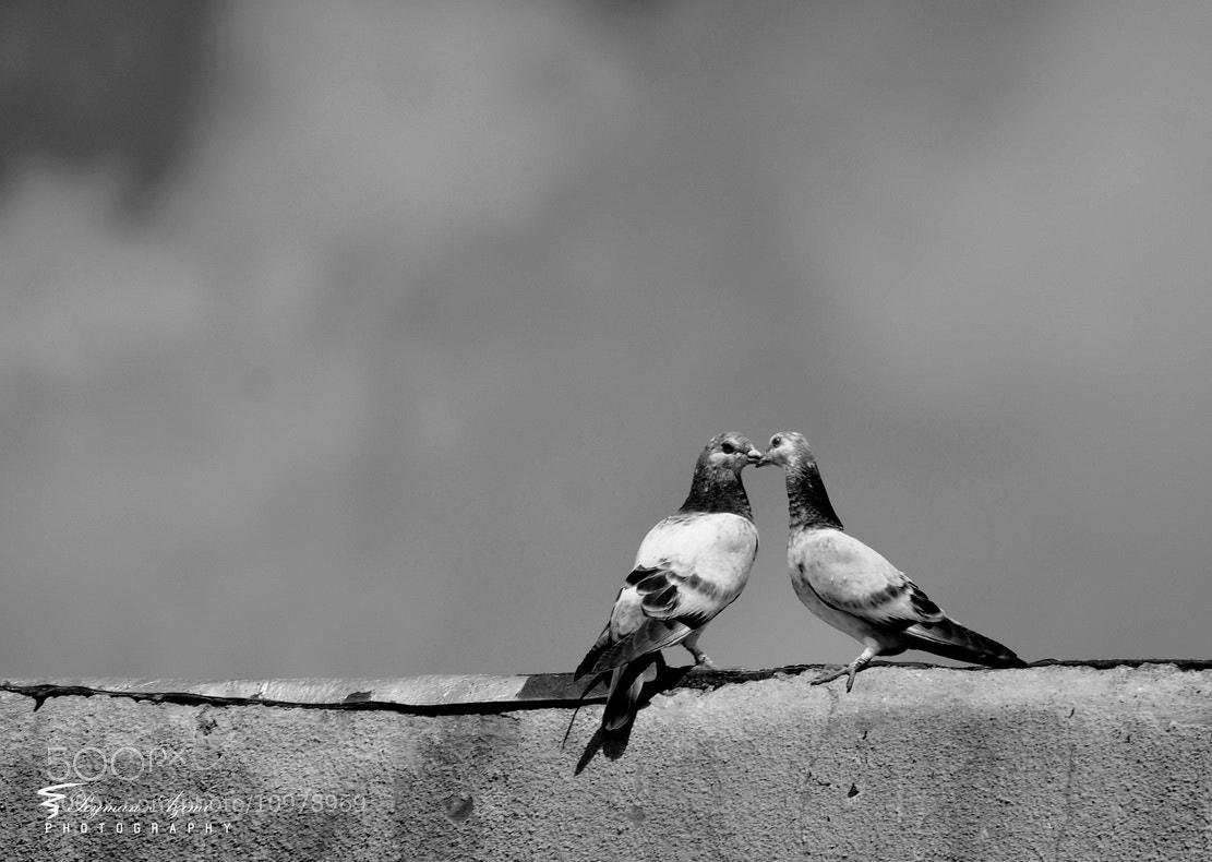 Photograph o><o by Peyman Az on 500px