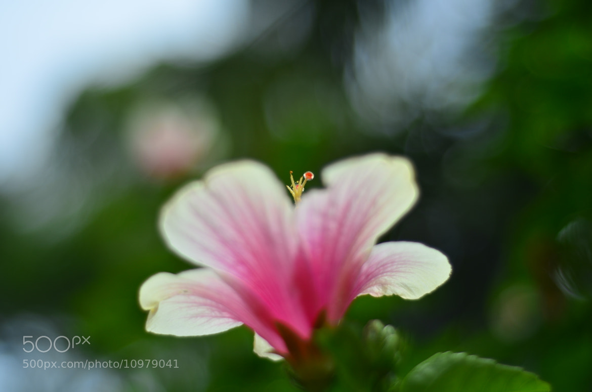 Photograph 03/08/2012 by Harikrishnan Nair on 500px
