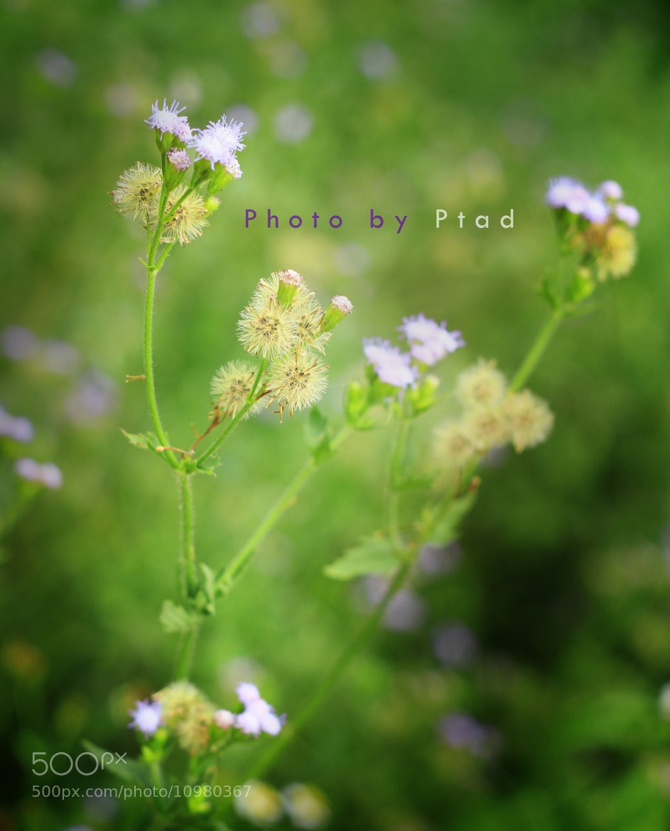 Photograph Flower in my mind v2 by Đổi Thay on 500px