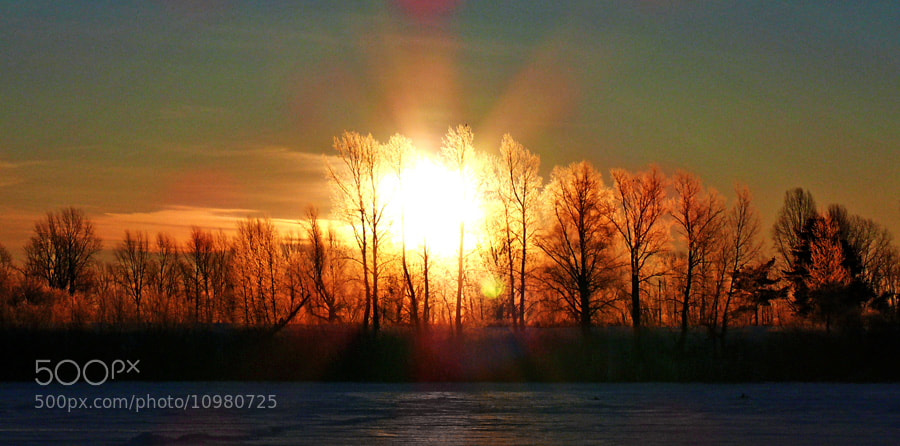 Photograph  Winter sun by Mars Shangareev on 500px