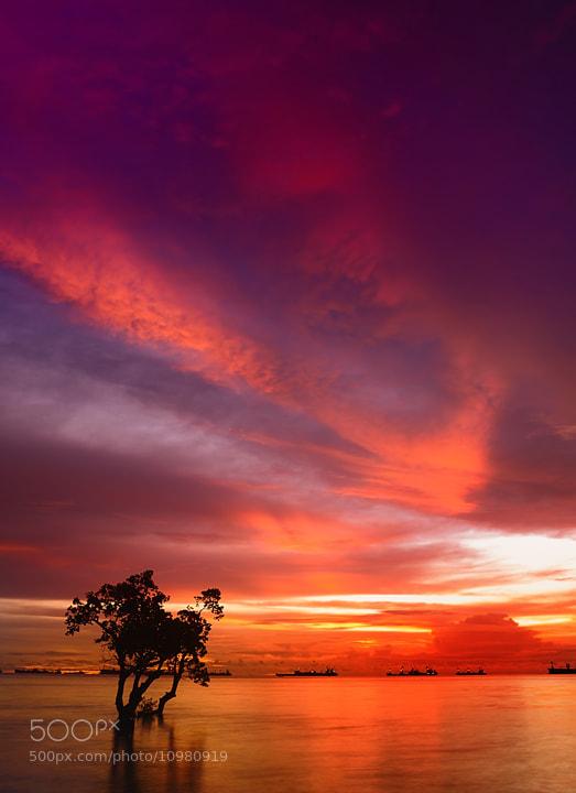 Photograph birds of fire by rio dejenairo on 500px