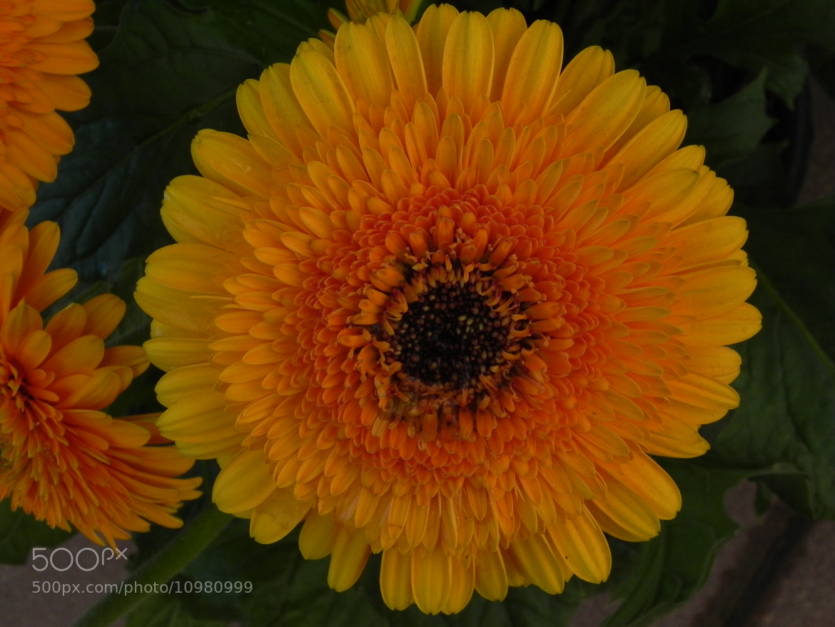 Photograph yellow-orange by Liora Levin on 500px