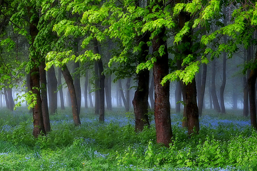 Photograph Mysterious forest by * *  REgiNA  * *  on 500px