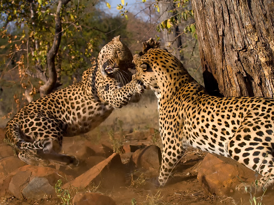 Photograph Family Fight by Christopher R. Gray on 500px