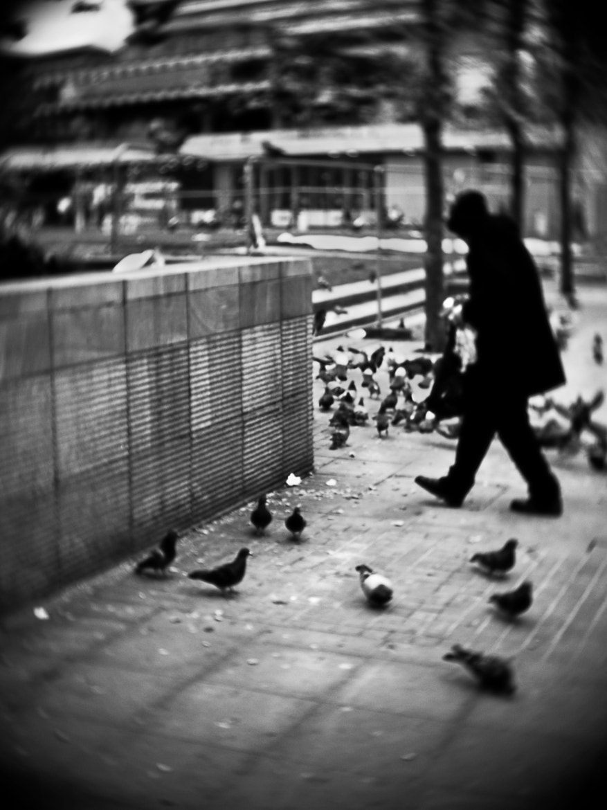 Photograph Stealing from the Pigeons by Jarod Hargreaves on 500px