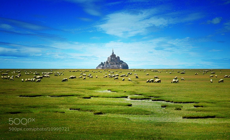 Photograph Les moutons de mont St Michel by Saghani  on 500px