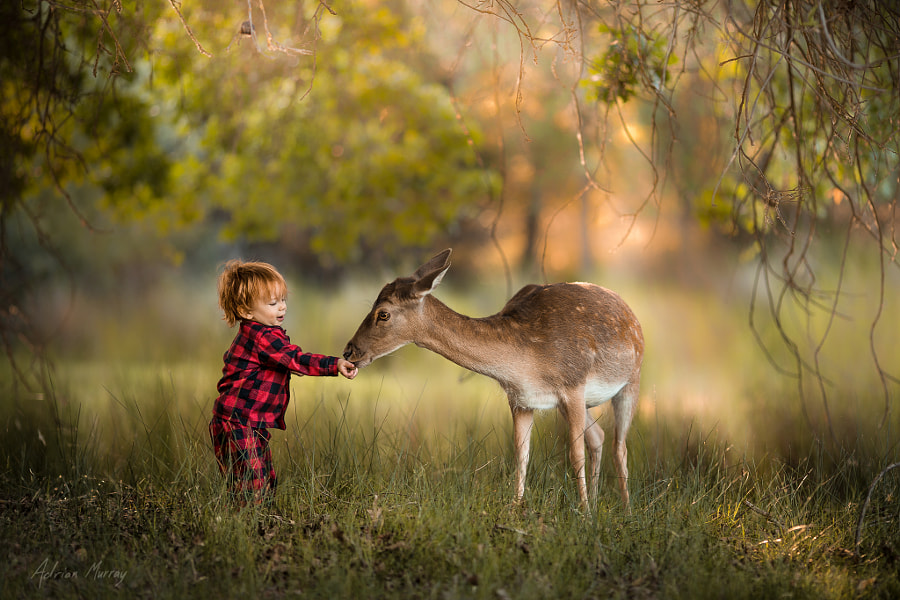 A Morning Walk by Adrian C. Murray on 500px.com
