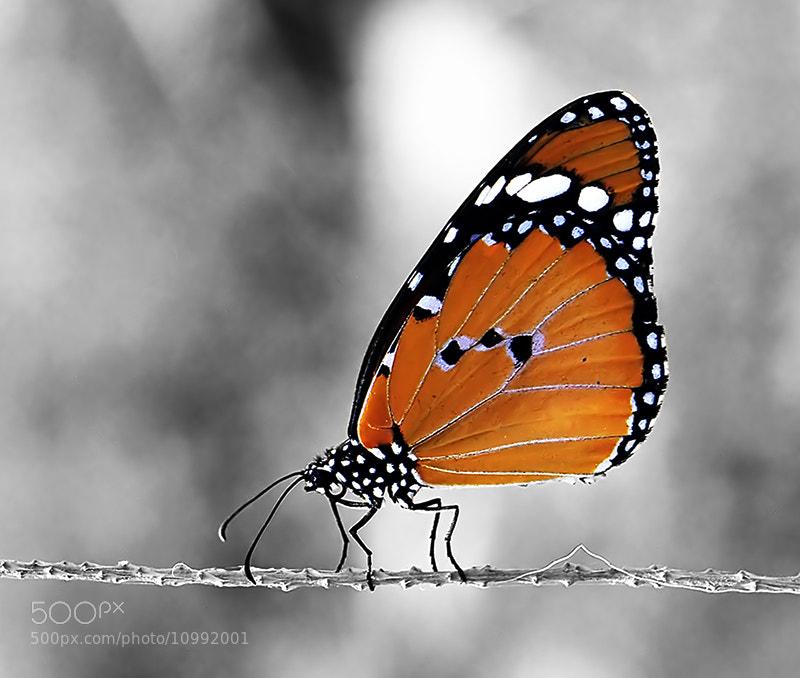Photograph // Elegance \\ by almalki abdullrahman on 500px