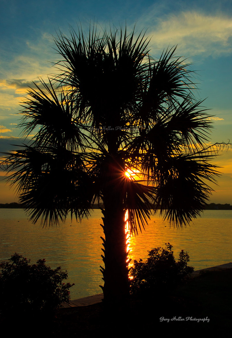 Photograph Flaming Palmetto Palm by Gary Hollar on 500px