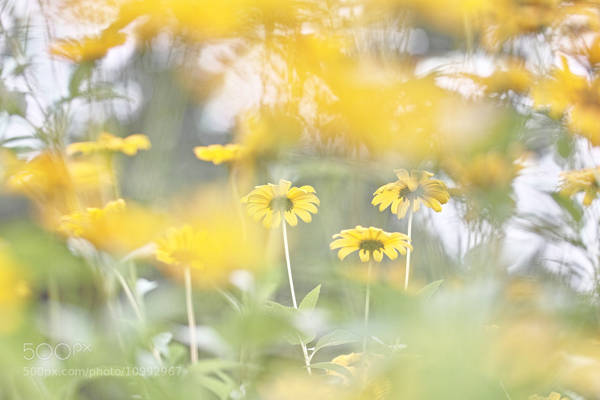 Photograph YellowYellow by marbee .info on 500px